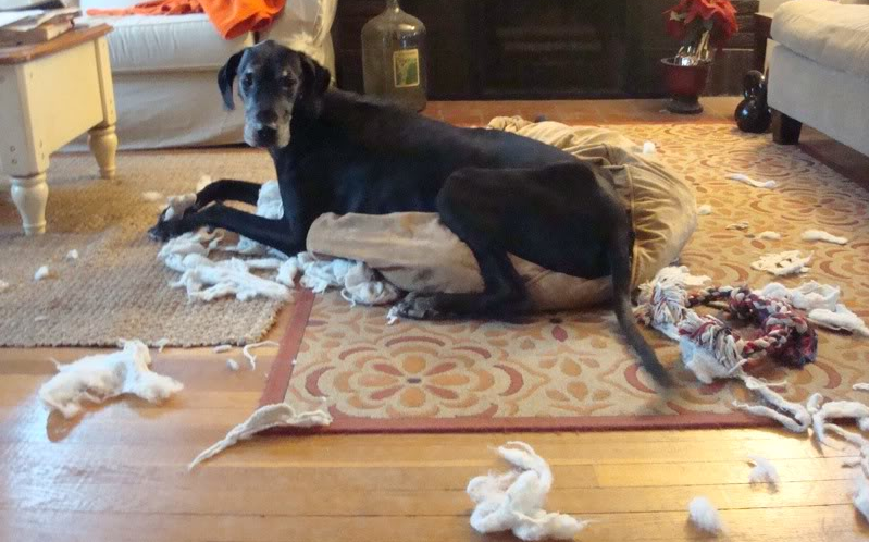8 Perlakuan Salah Pada Anjing Peliharaan yang Harus Dihindari