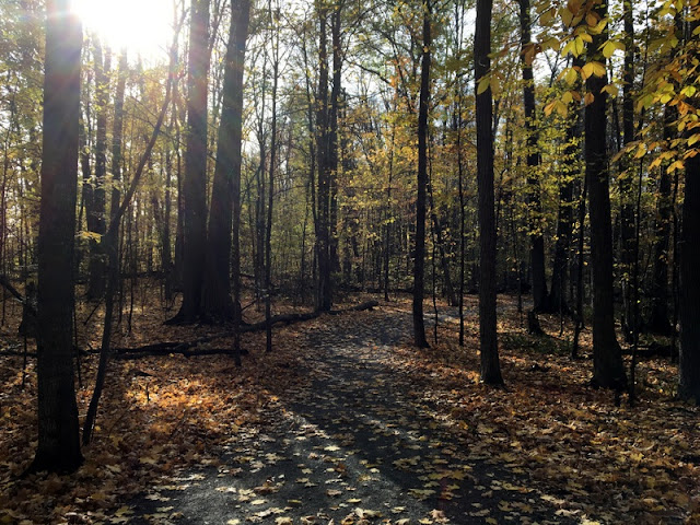 Last of the fall  leaves along the Rideau Valley Conservation Society walking trail