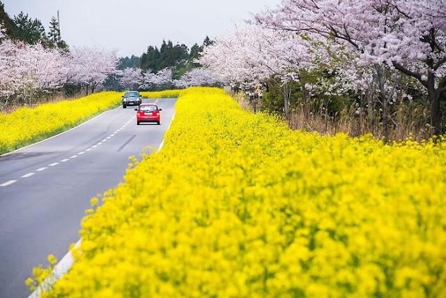 Đảo Jeju Thiên Đường Tình Yêu