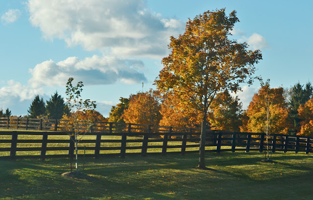 A small field on a horse ranch showing trees in autumn colours.
