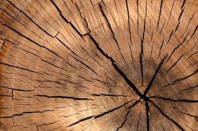 drewno na ognisko musi byc suche