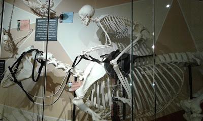 Skeletons - Orlando