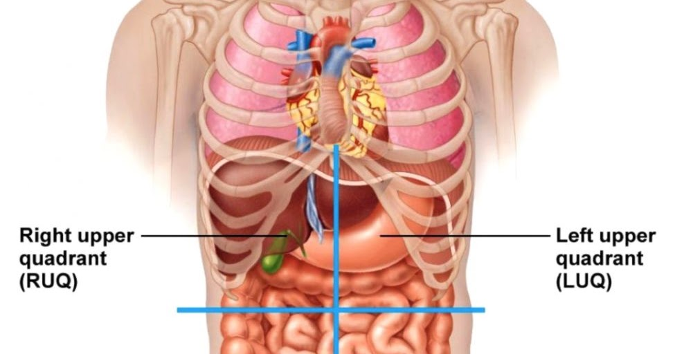 Male Anatomy Diagram Wallpapers Quality