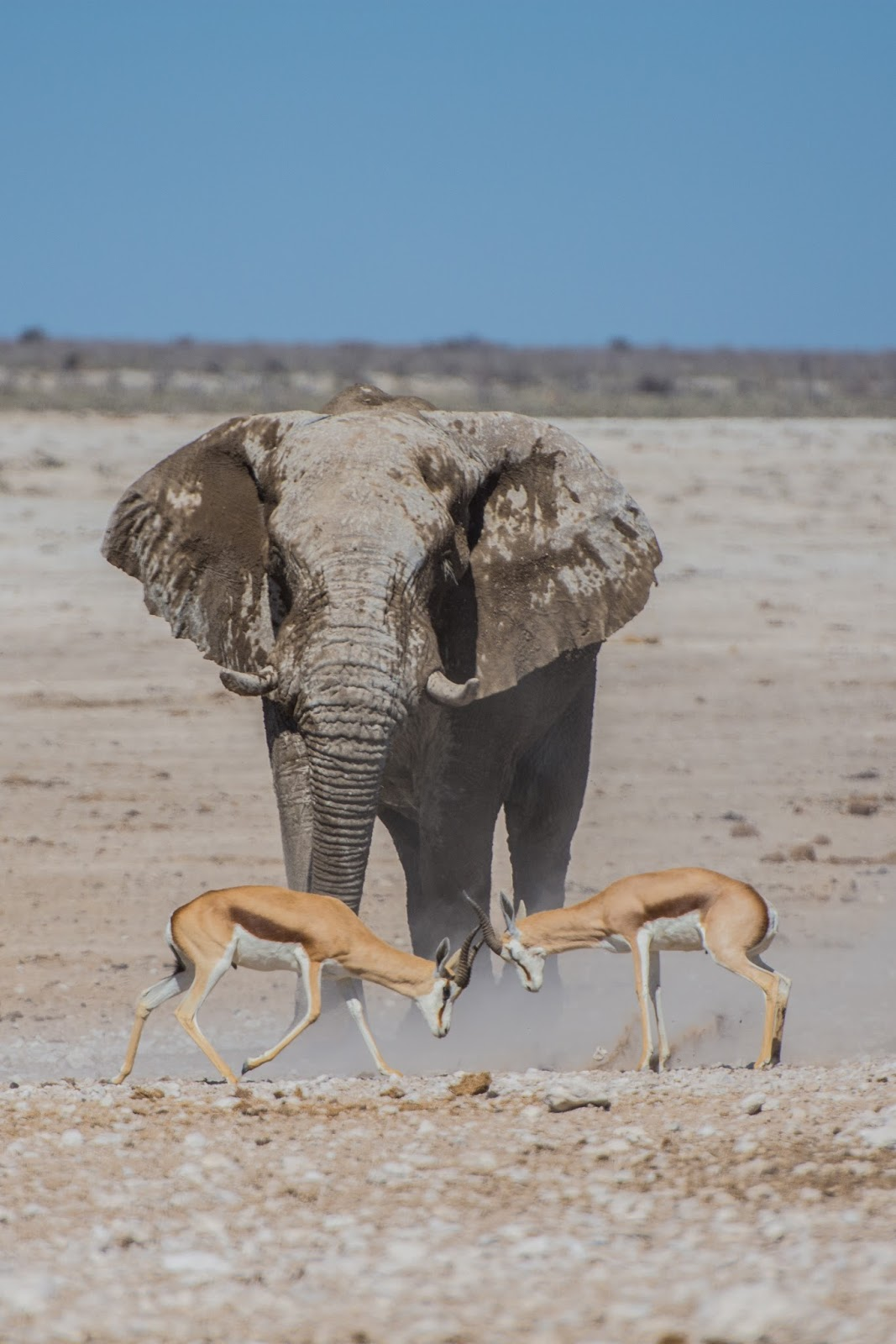 A funny picture of an elephant and gazelles.