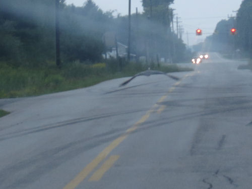 blue heron flying down a road