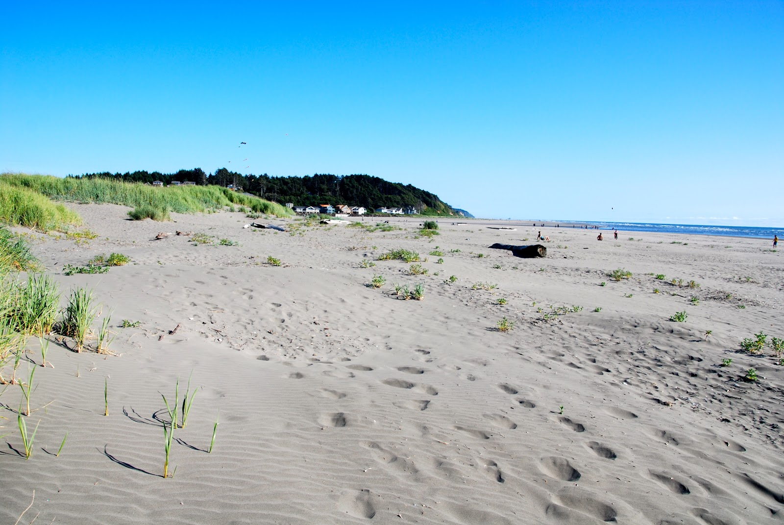 Pacific Beach State Park | Outdoor Project |Pacific Beach State Park