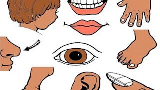 Anggota Tubuh Manusia Dalam Bahasa Arab Disertai Artinya