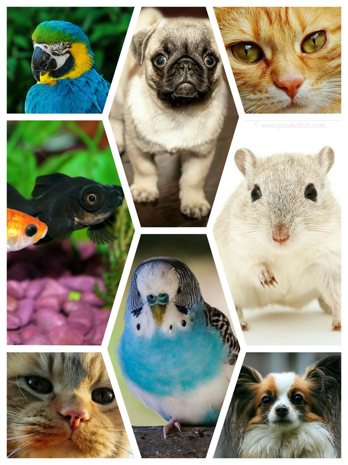 Collage of fur, feathered and finned pets. Find a pet name in this list,  inspired by food