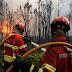 Portugal limitará los eucaliptos para prevenir incendios