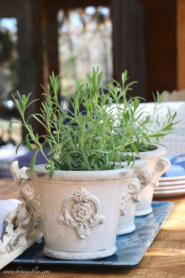 french lavender bedding plants in french design urns