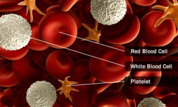 Human Blood Cells and Platelets