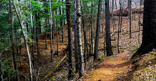 Hemlock Trail at Wildcat Mountain State Park