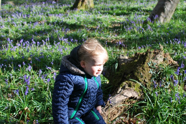 Bear Amongst The Bluebells Toddler deep in thought sat on log