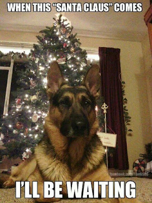 Funny Dog Humor Just watting for santa to come #santa