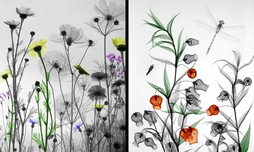 00-Arie-van-t-Riet-Colored-X-ray-Photographs-of-Nature-www-designstack-co