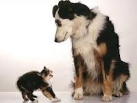 Gato bufado y perro