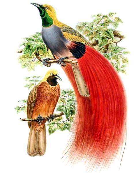 Jenis Macam Gambar Hewan Burung Unggas Alves Freewaremini