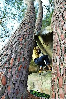 Jouant les pins, 7B, par Valentin