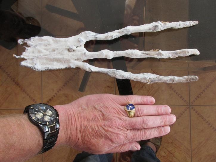2f0c78bd16960 Comparativo de uma mão humana com a