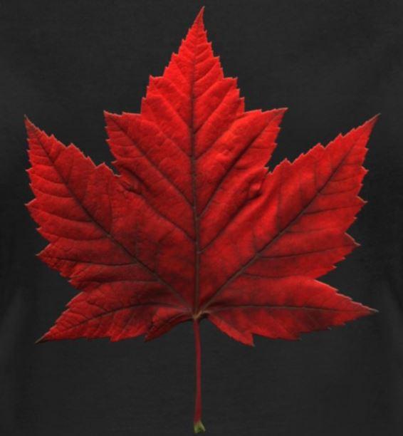 canadian maple leaf images - 566×612