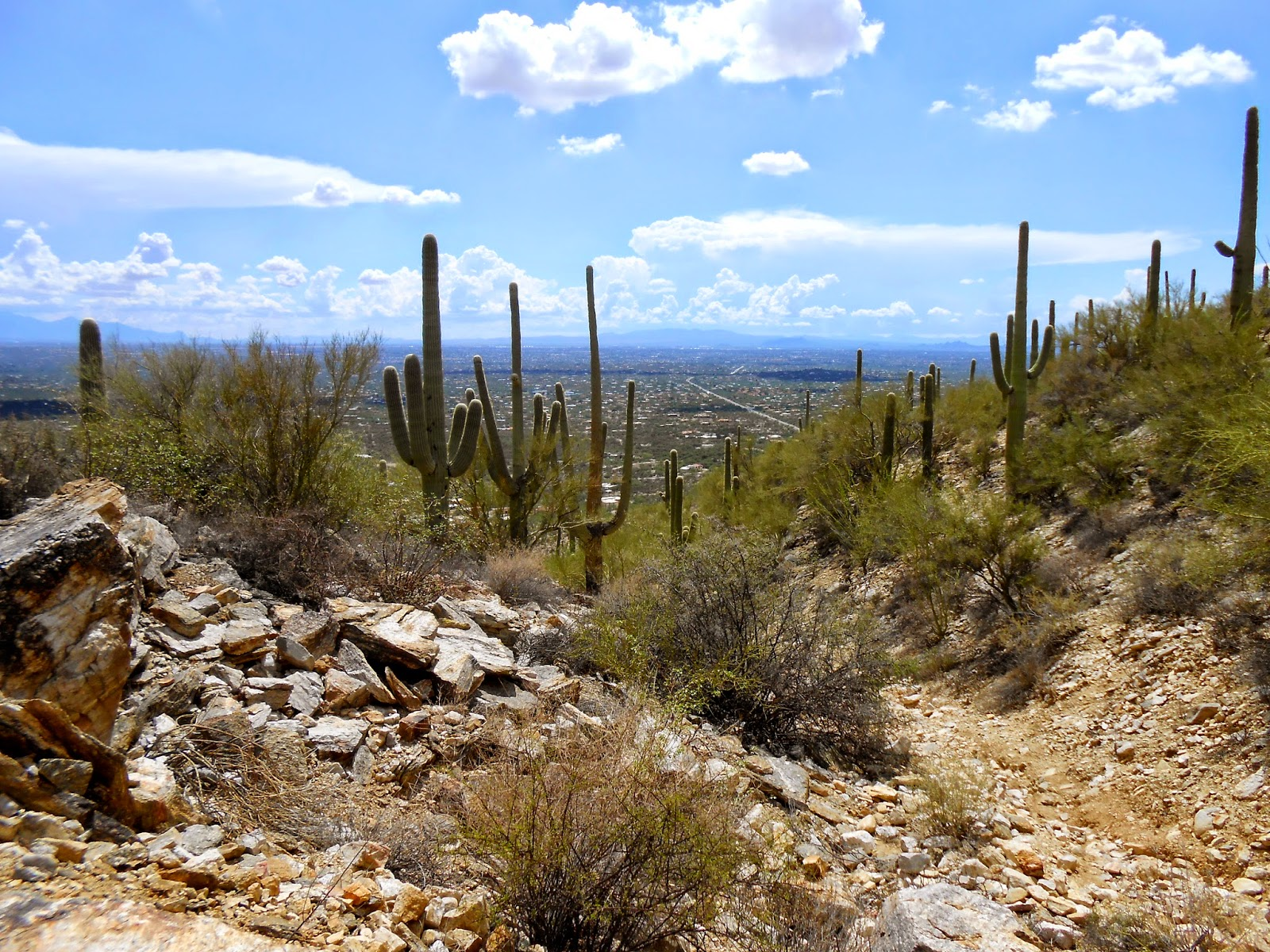 overlook in tucson mountain park