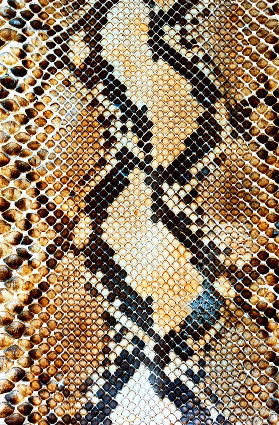 Snake Skin Wallpaper Pixell Wallpapers