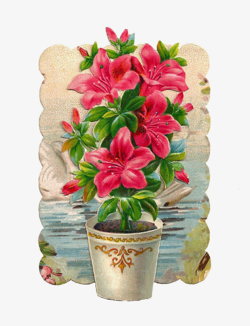 Antique Images Free Flower Clip Art Pink Hibiscus Flowers In White