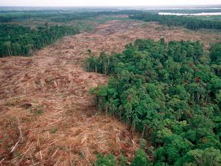 Fallen logs in the heart of the Chocó rainforest, Ecuador.