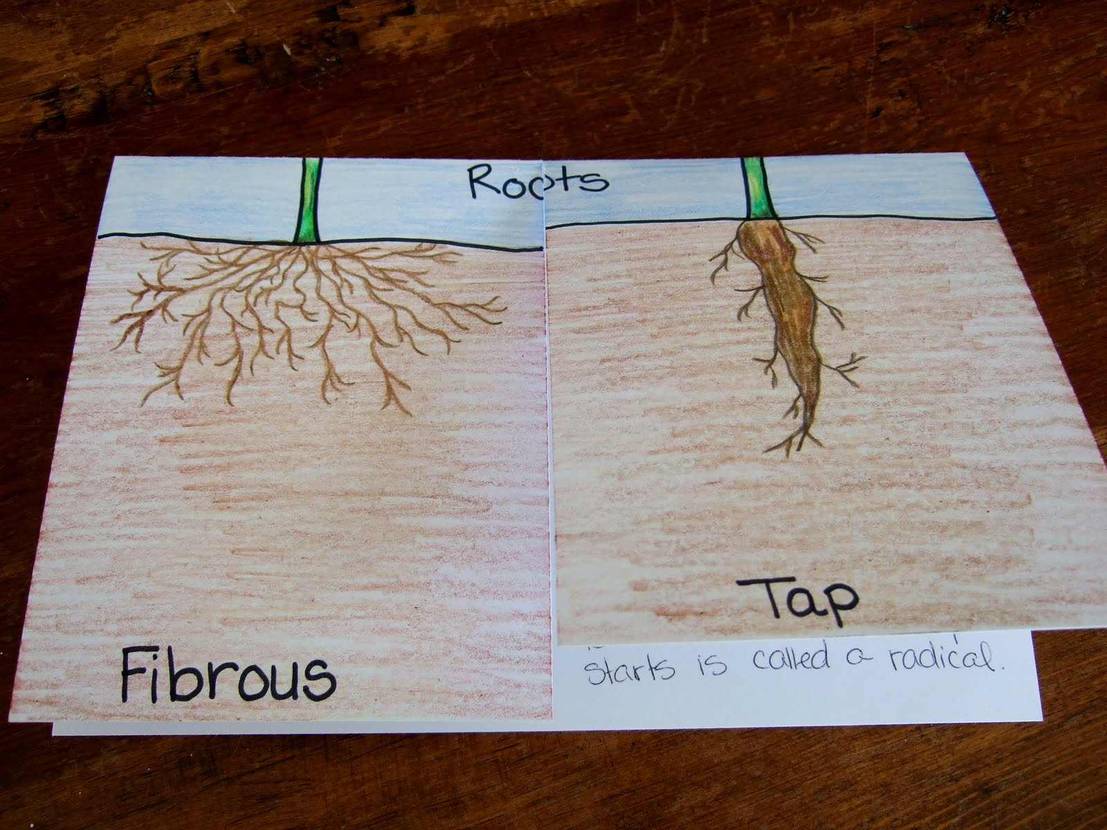 The Inspired Classroom Types Of Roots A Science Foldable