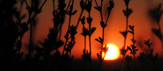 Fotoperiodo y floracion