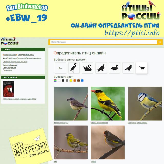 список определителей птиц