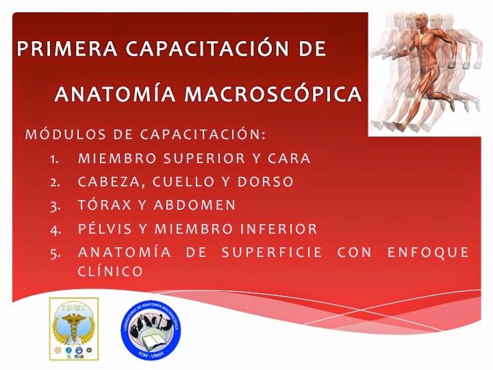 FCM-UNAH Anatomía Macroscópica: Primera Capacitación de Anatomía ...