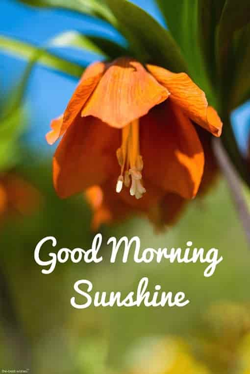 good morning sunshine with orange flower