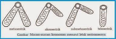 metasentrik telosentrik, akrosentrik