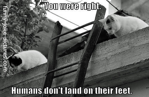 Hilarious Feline Cat Humans Land Feet Joke Picture