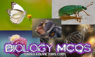 CBSE Class 12 / AIPMT / NEET - Biology MCQs