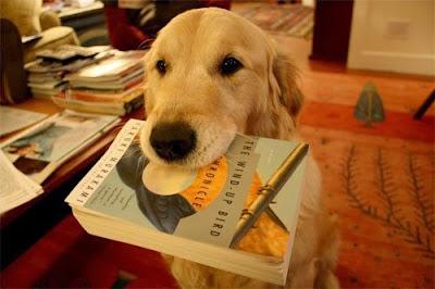 Educar Perro Labrador