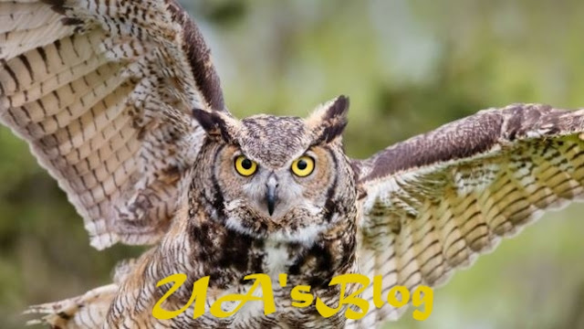 Owls Are Not Witches: See Some Facts You Did Not Know About Them