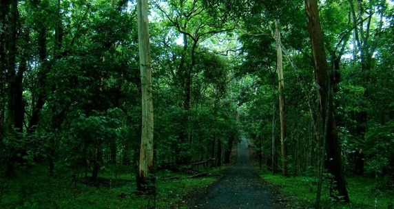 Gavi, Kerala Roads in Forest