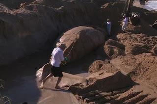 http://vnoticia.com.br/noticia/1816-baleia-jubarte-que-apareceu-morta-em-marataizes-e-enterrada