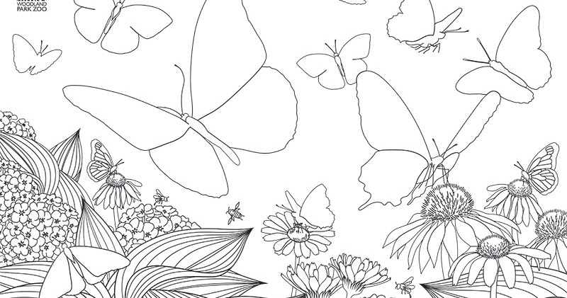Woodland Park Zoo Blog: Butterfly Wings all-ages coloring