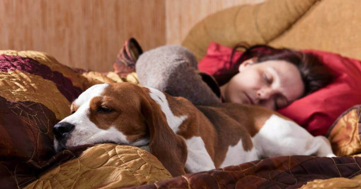 7 Reasons Why You Should Share Your Bedroom With Your Dog