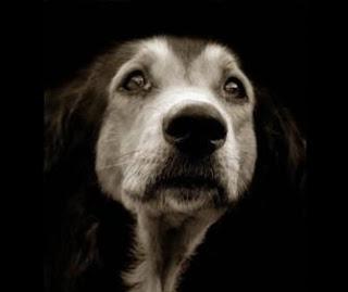 Бездомный пес фото