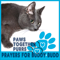 Purring for Buddy Budd
