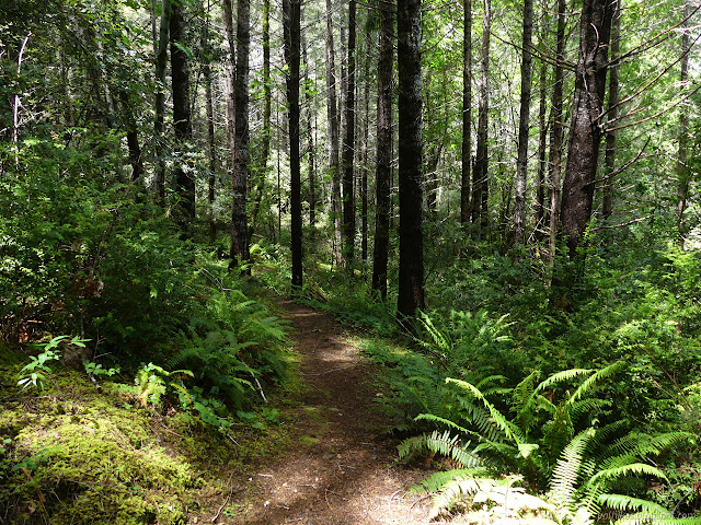 nice trail through the trees and ferns