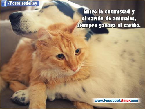 Imagenes Animales Con Frases De Amor