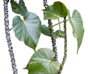 Personal and Home Care Products: Benefits of Makabuhay ...