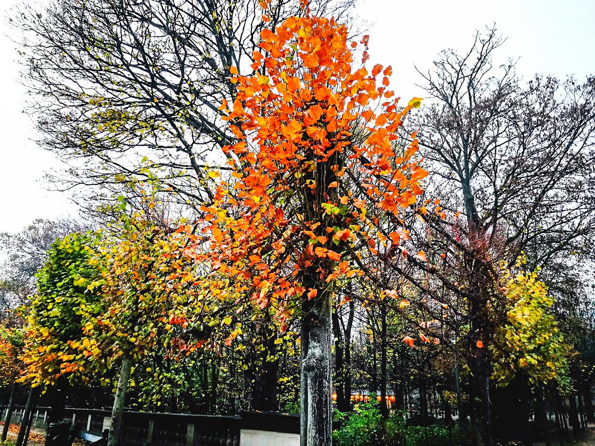 Bruksela park