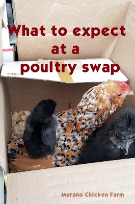What is a chicken swap?