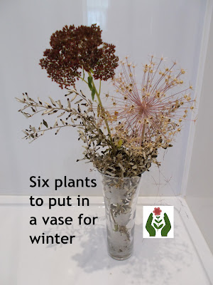 Plants to put in a vase for winter Green Fingered Blog